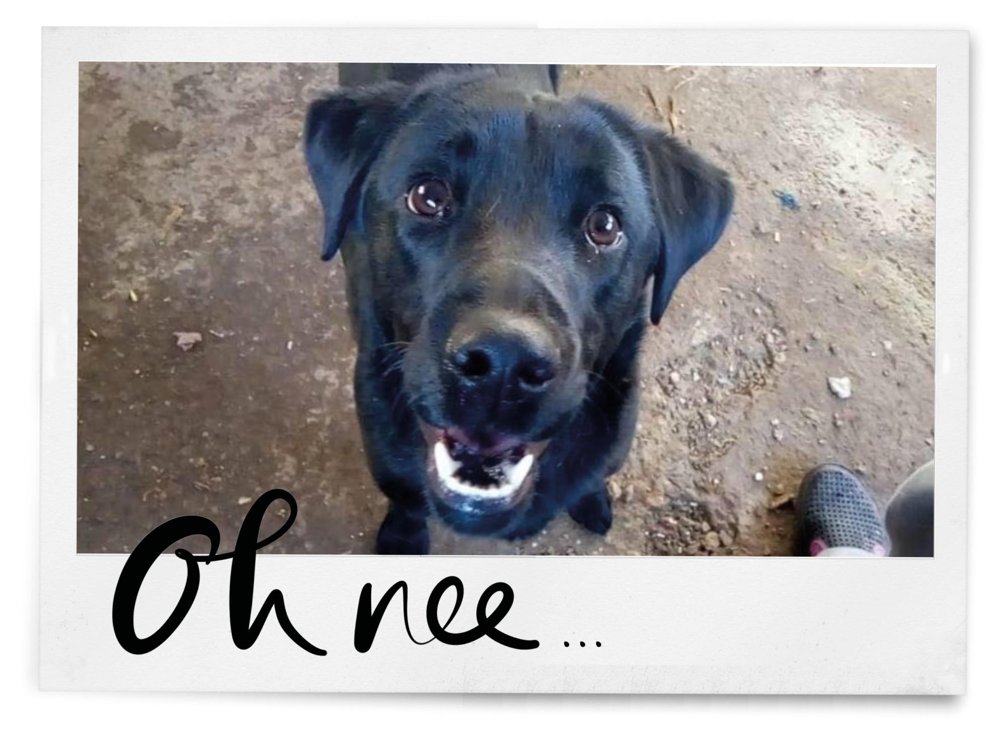 zwarte hond sima kijkt zielig in de camera in polaroid met tekst oh nee