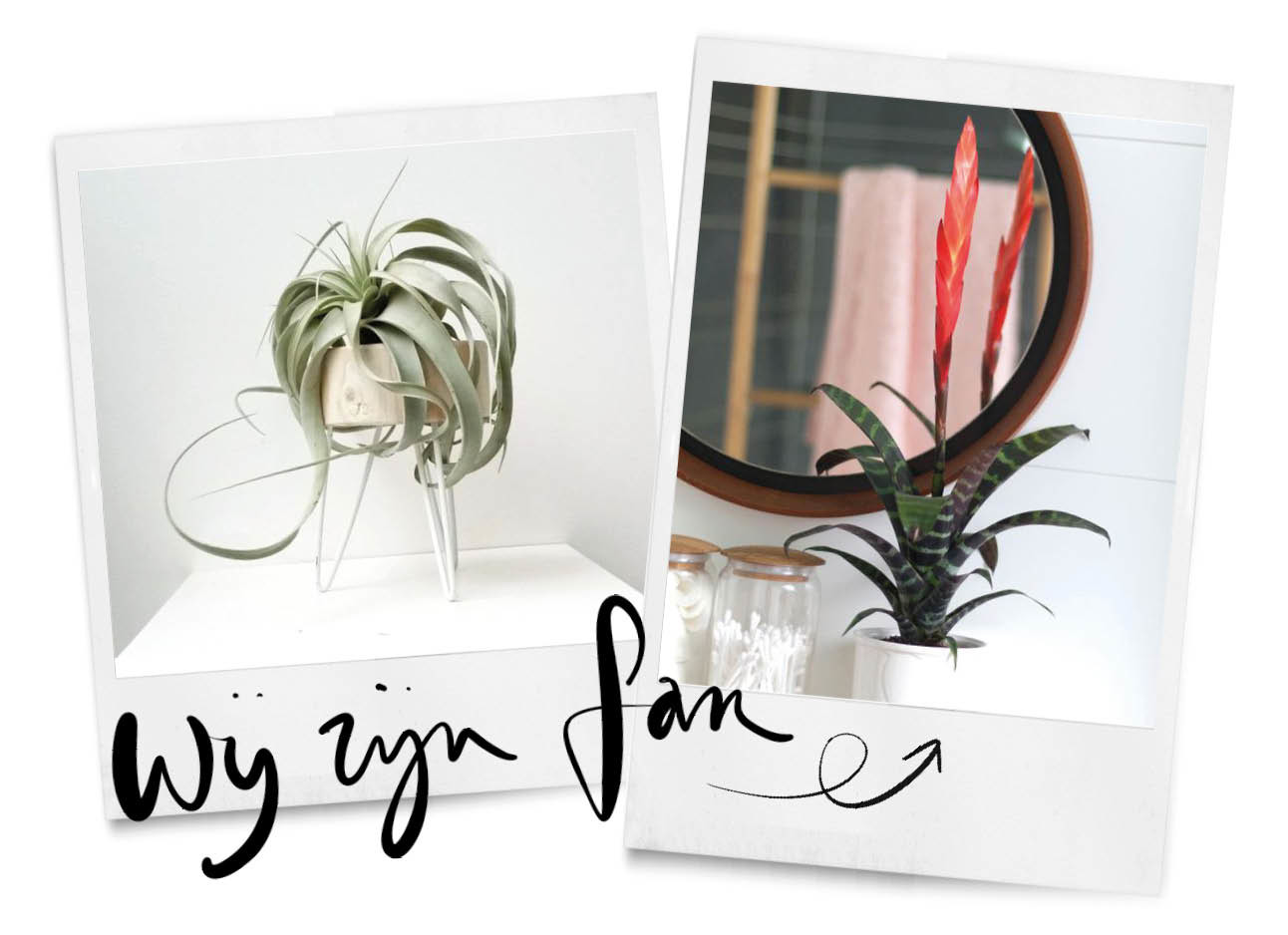 planten op een witte achtergrond