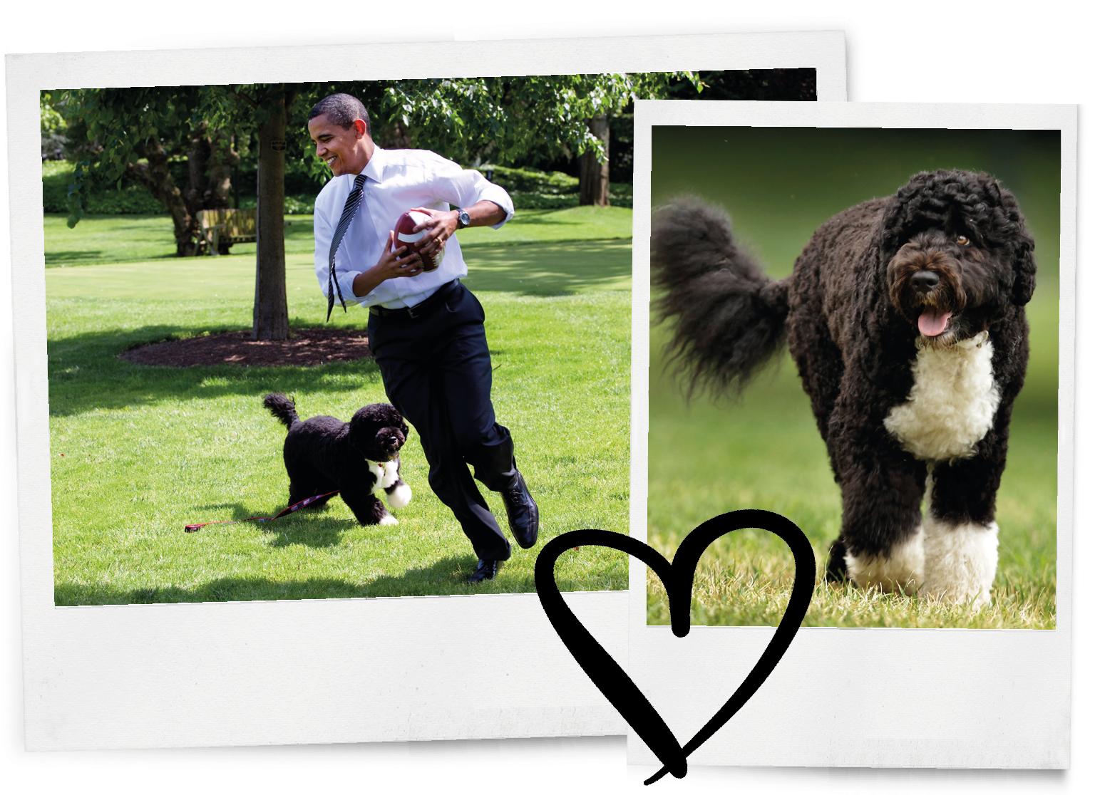De hond van de Obama's is overleden en Instagram rouwt