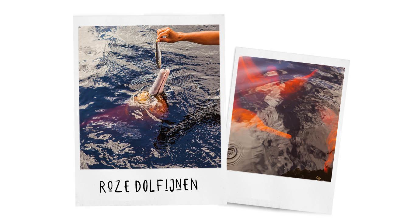 Roze dolfijnen in het water in brazilië