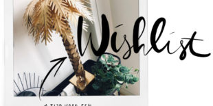 Daily mayKeep palm