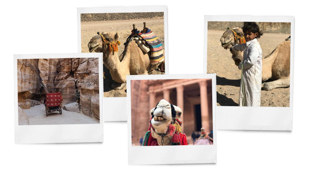beelden van kiki in de stad petra