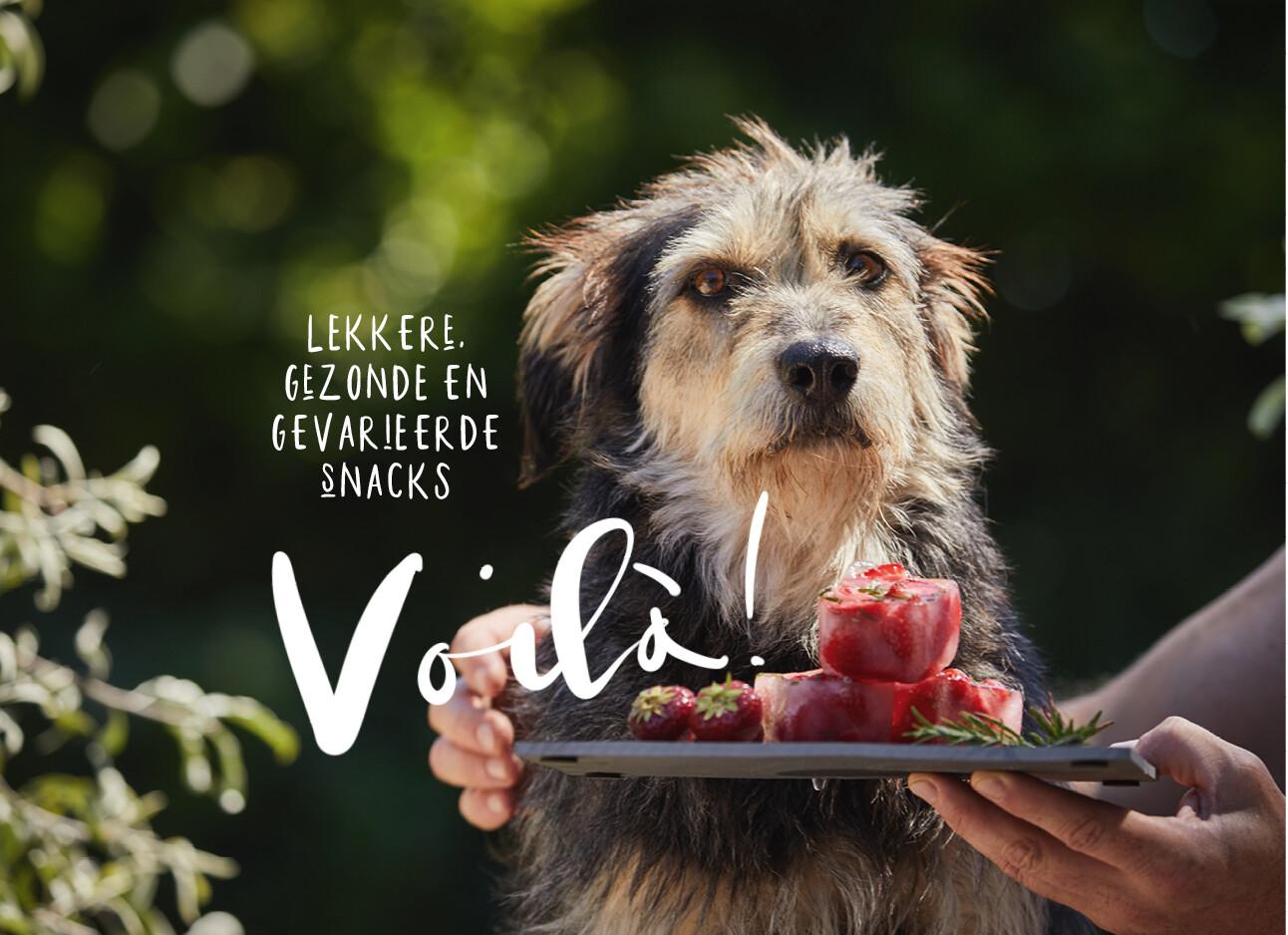 honden snacks ijs