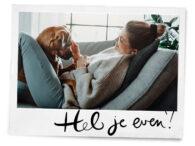 Dit is waarom een hond aan je kruist snuffelt