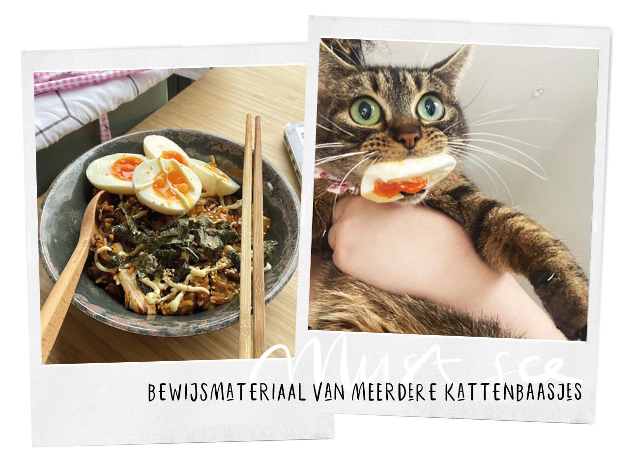 katten zijn niet te vertrouwen bij je eten