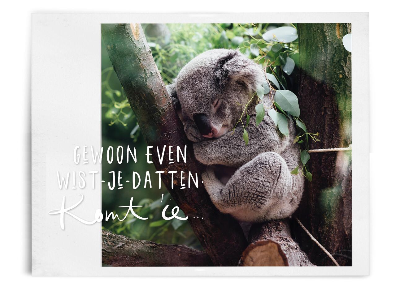 koalaberen in de boom aan het slapen