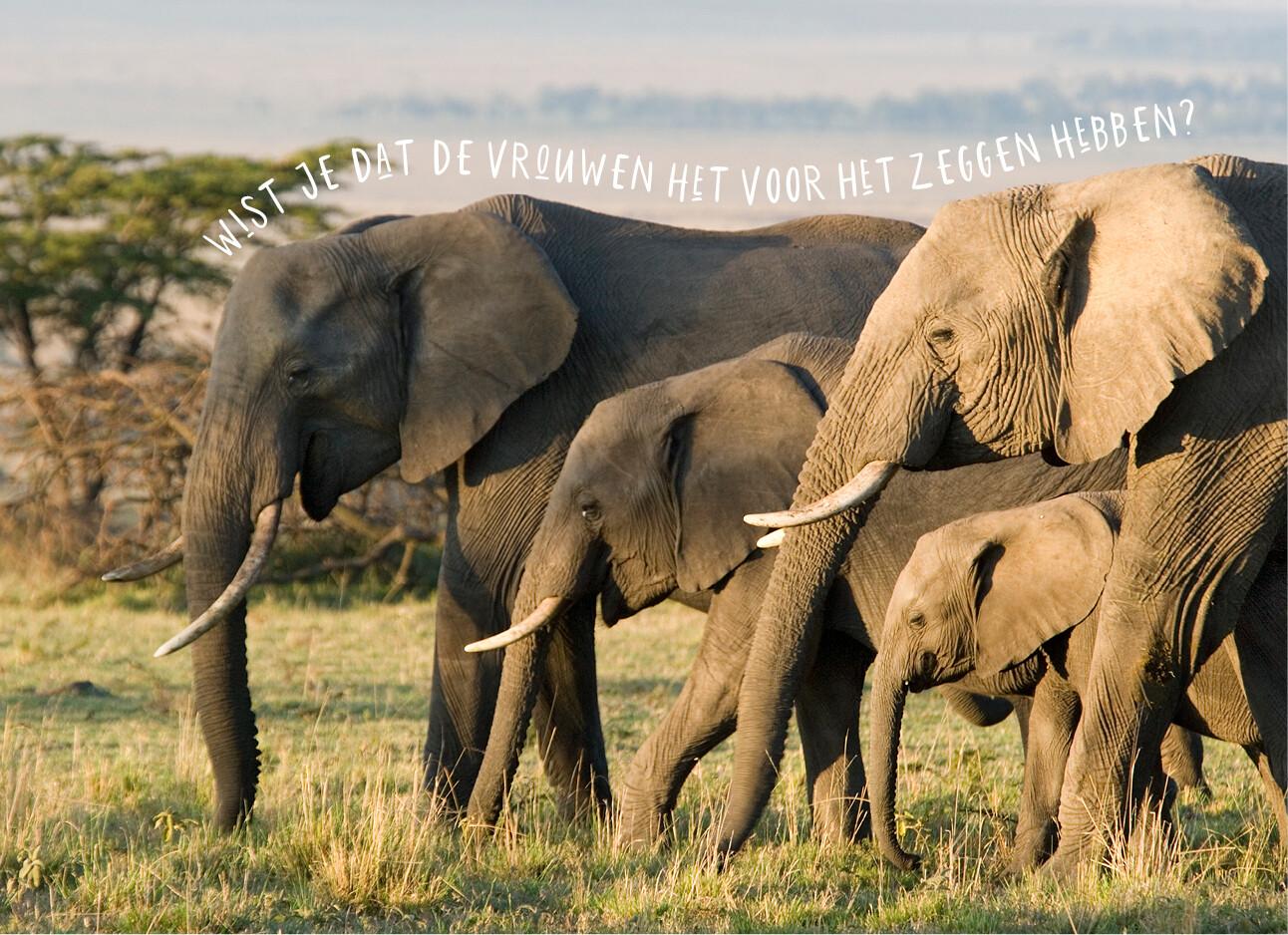 Wat we van olifanten kunnen leren