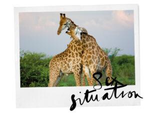 Wiekes weetjes: 10 opmerkelijke dingen over het seksleven van dieren