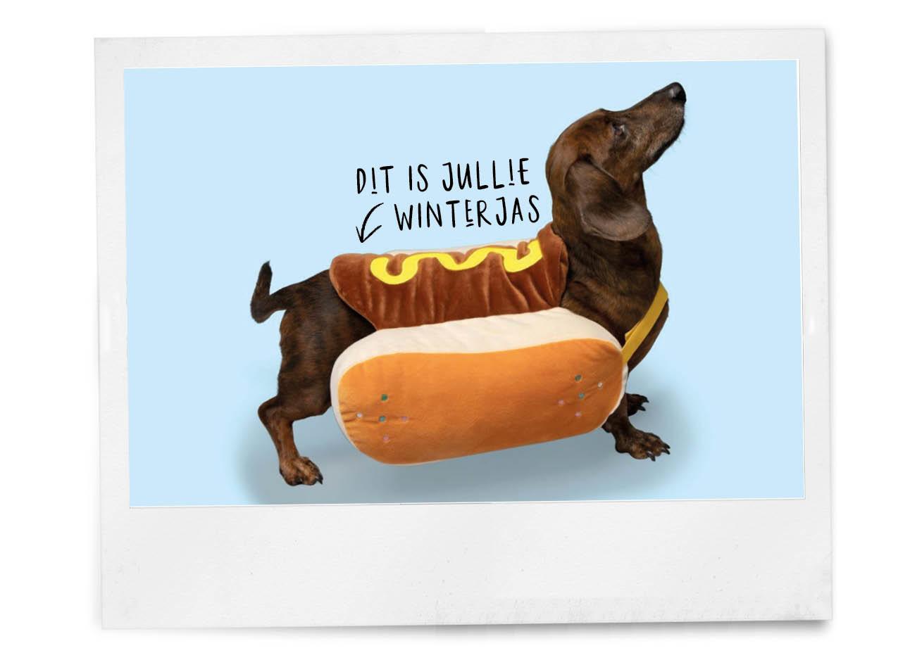 teckel in een hotdog jasje hema collectie winter