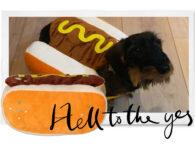 De HEMA heeft nu een hotdogpak voor je hond en het is te gek