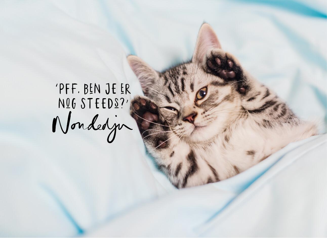 kitten in bed vermoeid