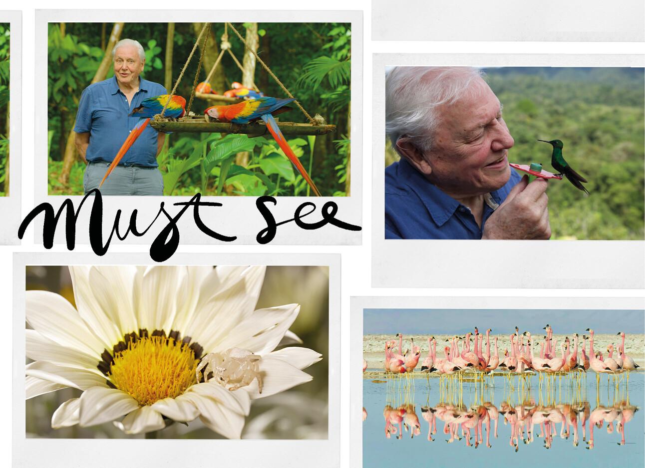 Kijktip van de dag: Life in Colour van David Attenborough