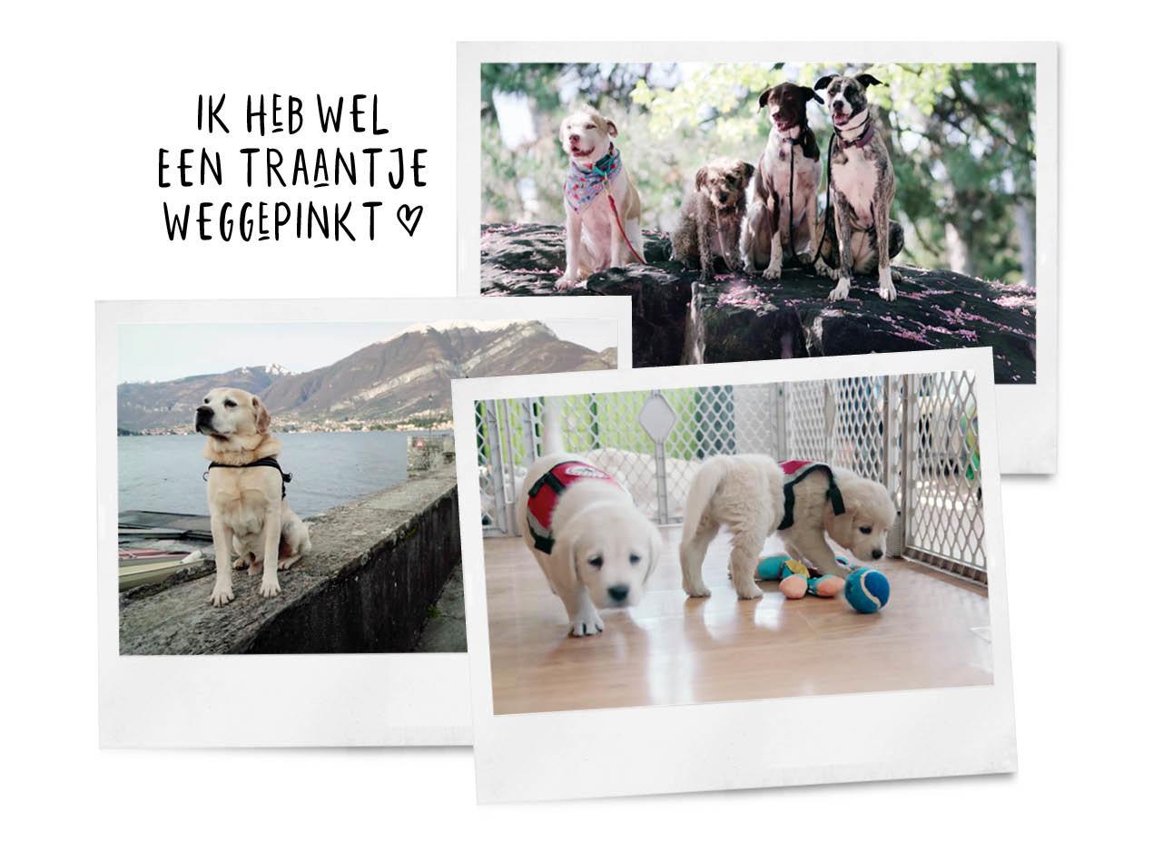 Honden serie Netflix dogs kleine en grotere licht harige honden