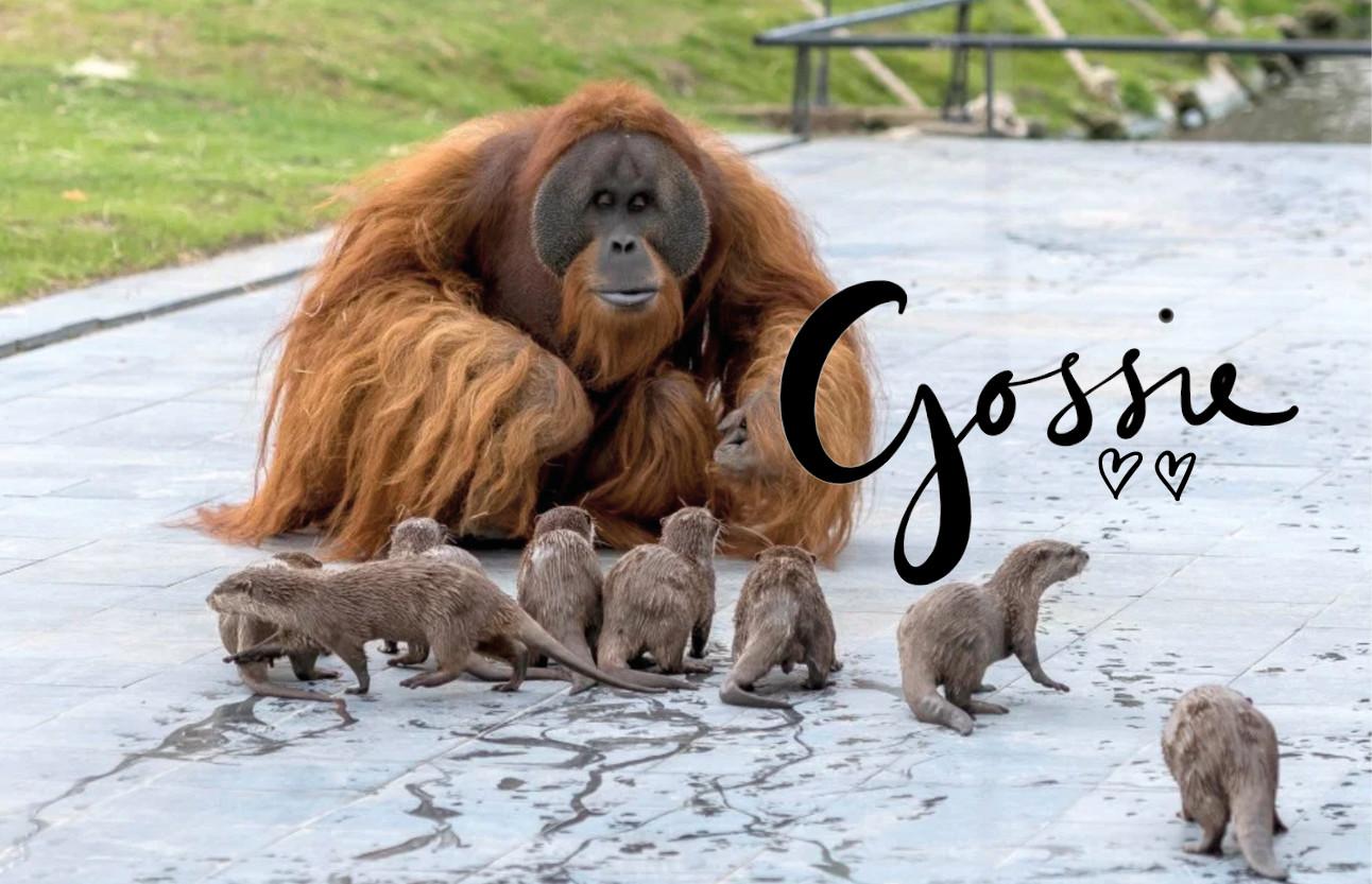 orang-oetangs en otters