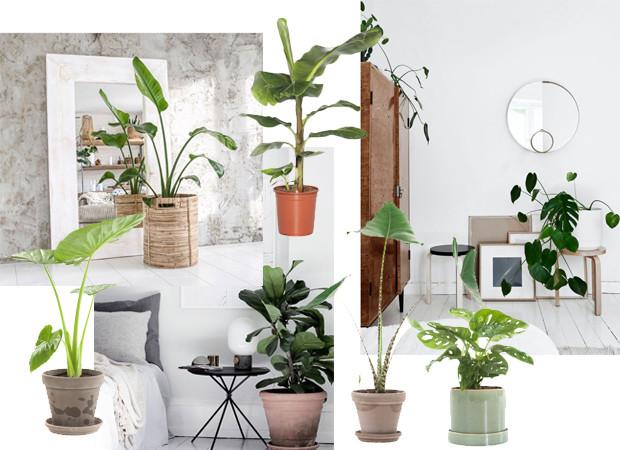 huiskamer planten shopping