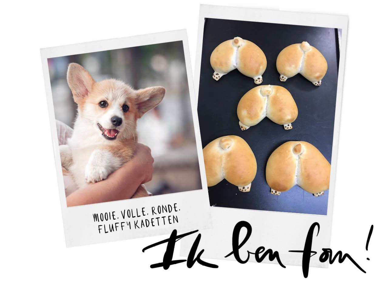 hond in iemand armen kontjes koekjes