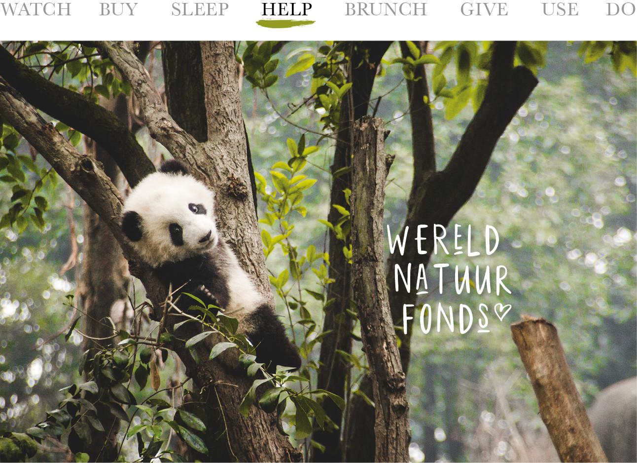 today we help wereld natuurlijk fonds panda beer