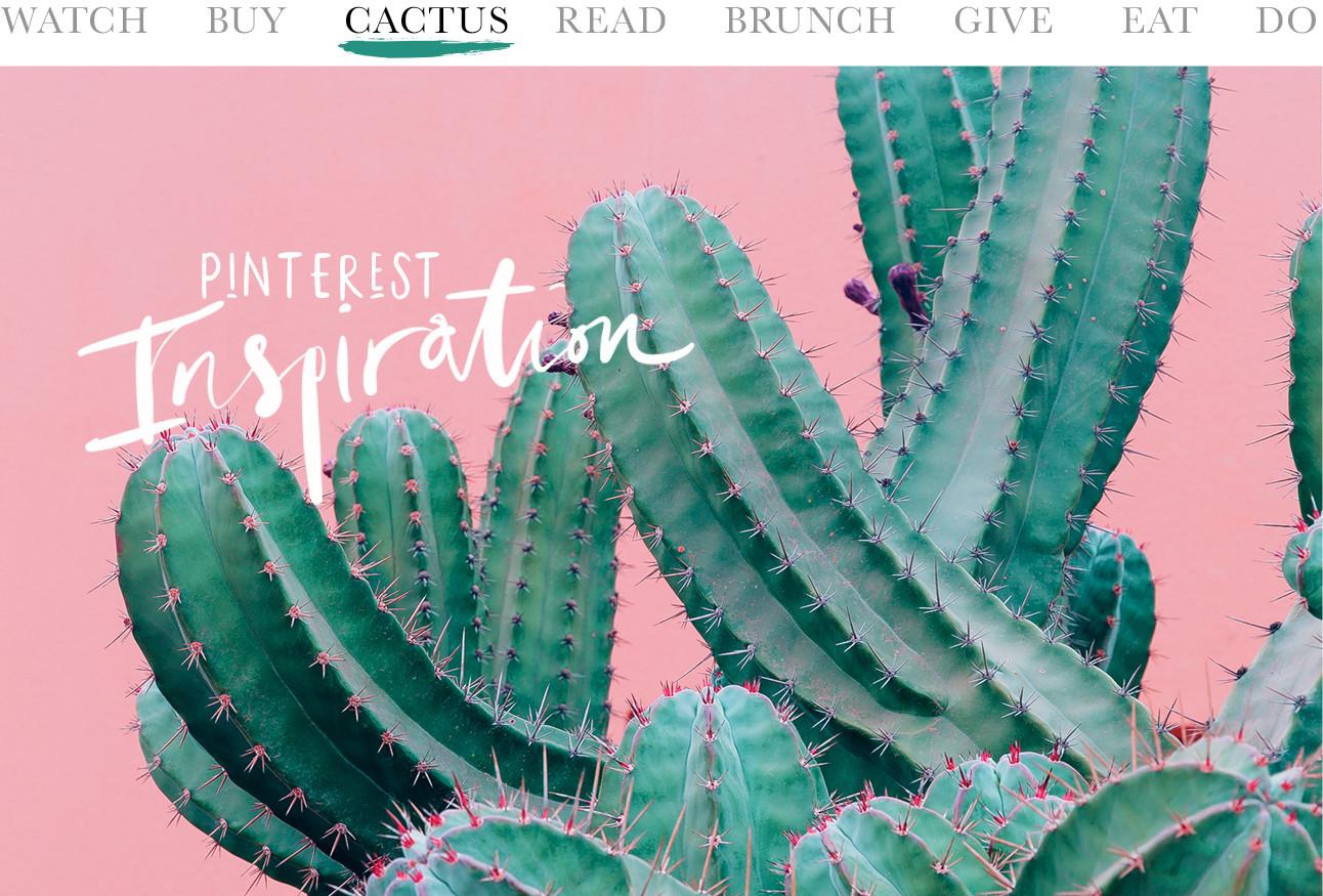 cactus op roze achtergrond