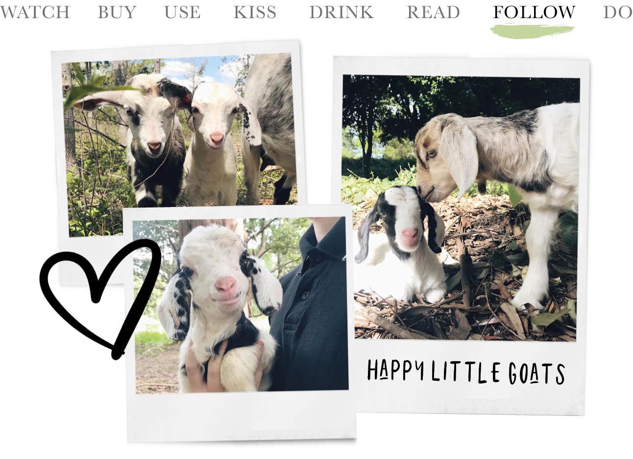 happy goats instagram