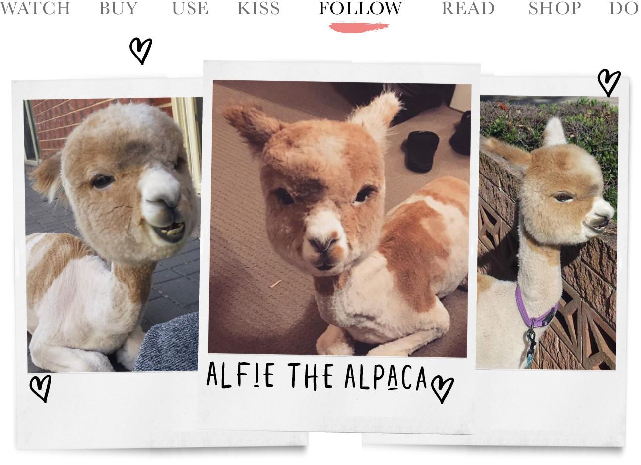 alfie de alpaca