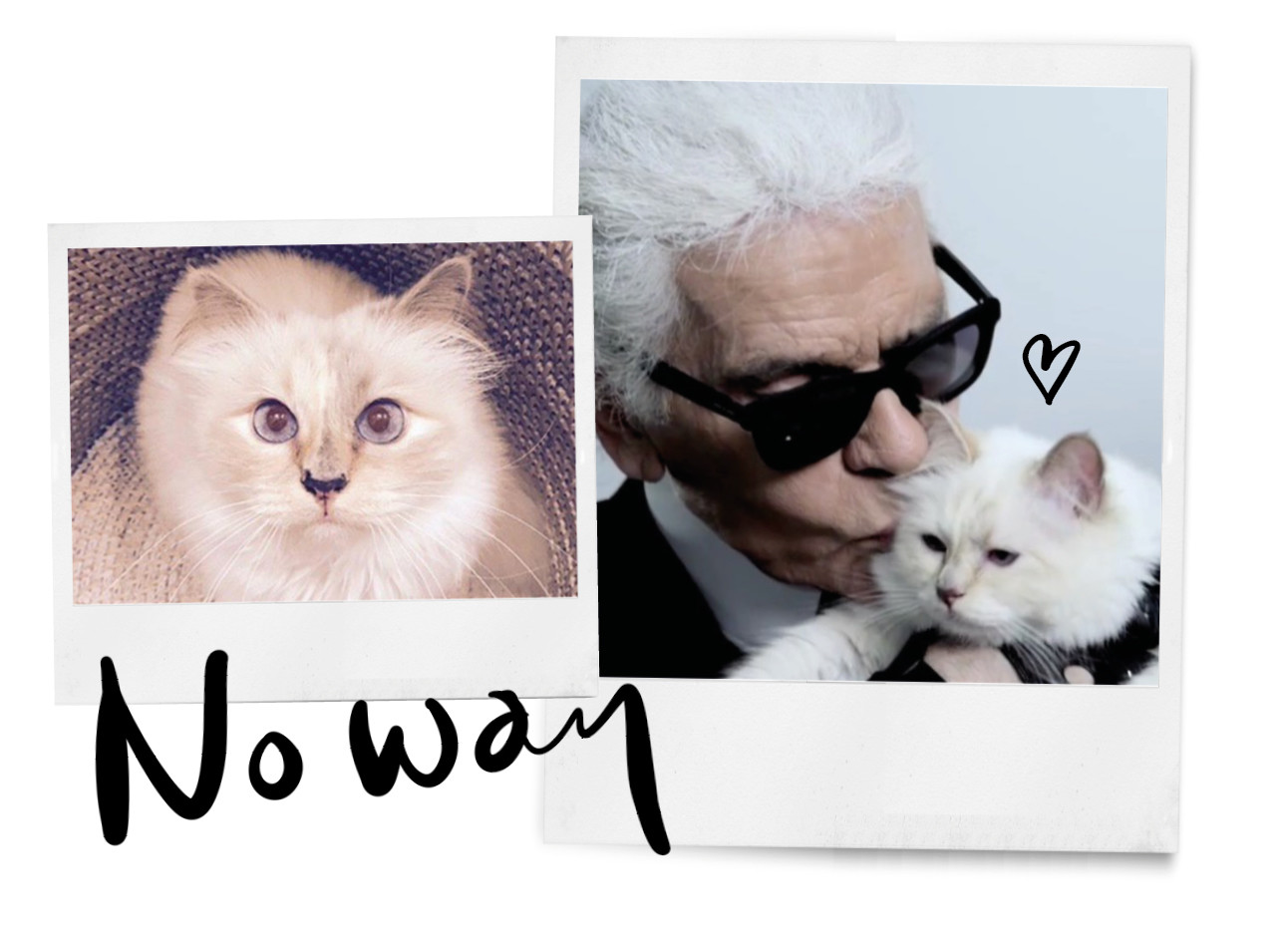 de kat van karl lagerfeld choupette, zonnebril, kiss