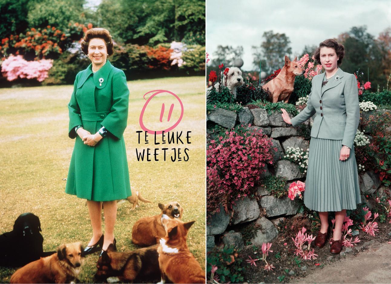 Even over de spuugverwende hondjes van The Queen
