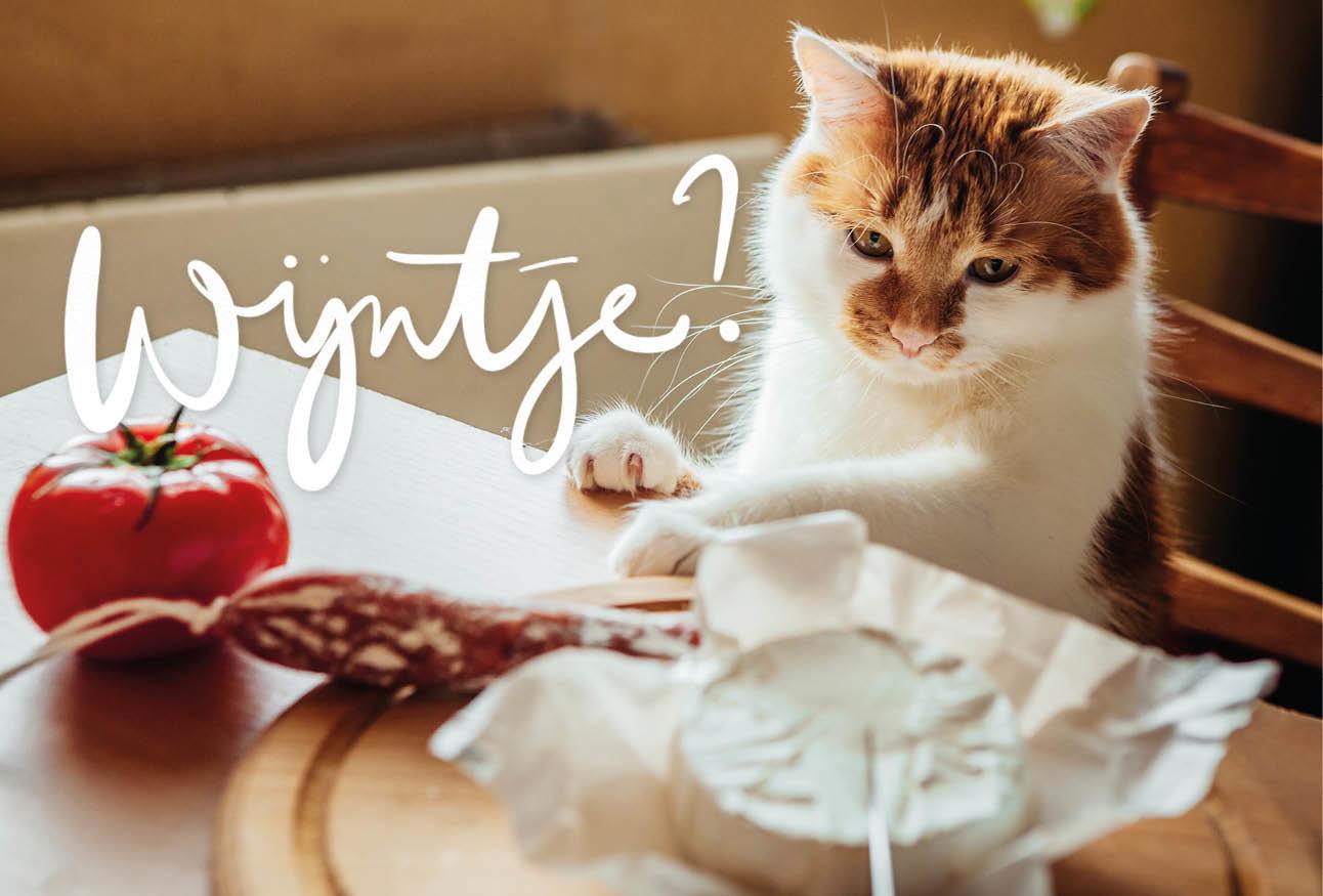 Een kat die aan tafel klimt en eten wil nemen